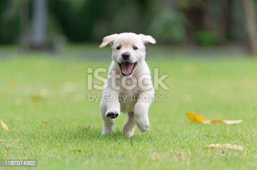 Happy puppy dog running on playground green yard