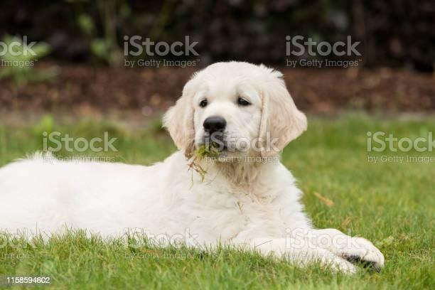Happy puppy ii picture id1158594602?b=1&k=6&m=1158594602&s=612x612&h=eha23rypfoqis 97d3vydhll6qrdp9jogdo067spgx8=