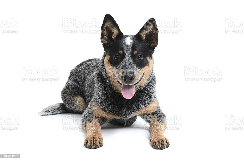 Szczęśliwy Puppy – zdjęcie