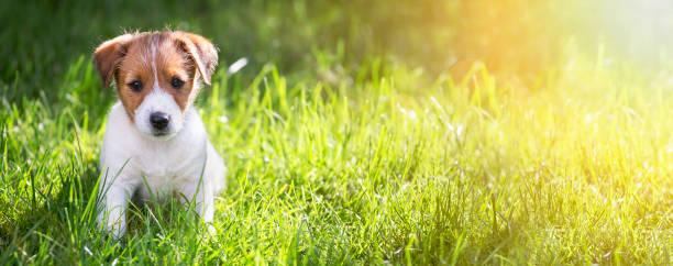 Happy puppy sitting in the grass picture id974283308?b=1&k=6&m=974283308&s=612x612&w=0&h=ilawb3hgkdb0x7tcuolxpme50mhf2crln dfmqgign8=