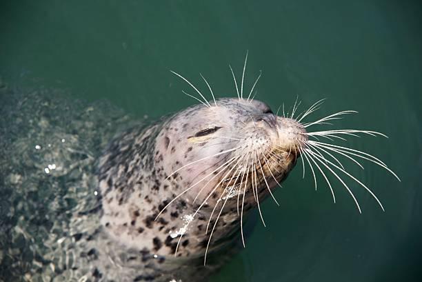Happy seal stock photo