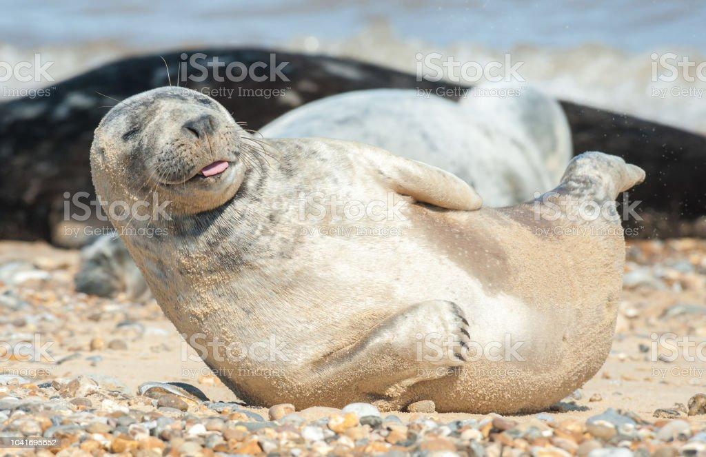 happy seal pup stock photo