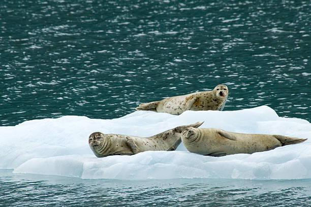 Happy seals stock photo