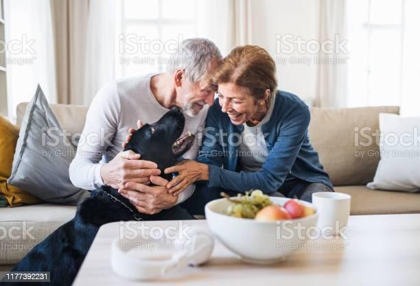 Happy senior couple sitting on a sofa indoors with a pet dog at home picture id1177392231?b=1&k=6&m=1177392231&s=612x612&h=oa0i4fhbppz8xhp8ledjyayx7o5iuw8brtpfvhrextc=