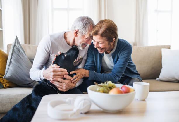 Happy senior couple sitting on a sofa indoors with a pet dog at home picture id1177392231?b=1&k=6&m=1177392231&s=612x612&w=0&h=sw7kj9nnyu24efyplyl1ozrziphjpv90ku8wfaig1f8=