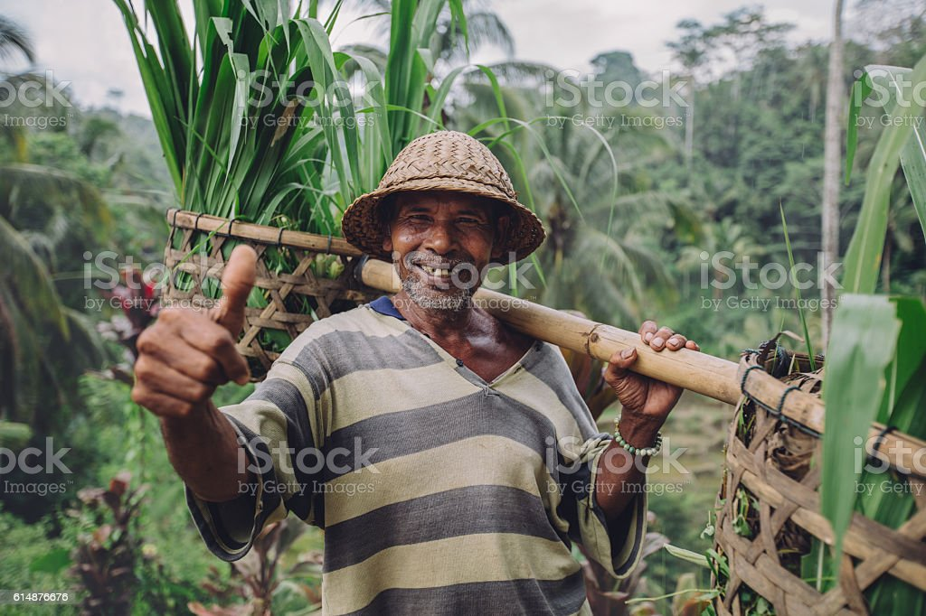 Happy senior farmer giving thumbs up stock photo