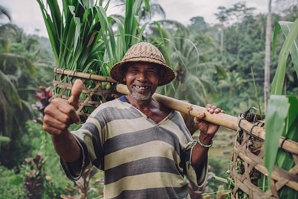 happy senior farmer giving thumbs up - indonésie photos et images de collection