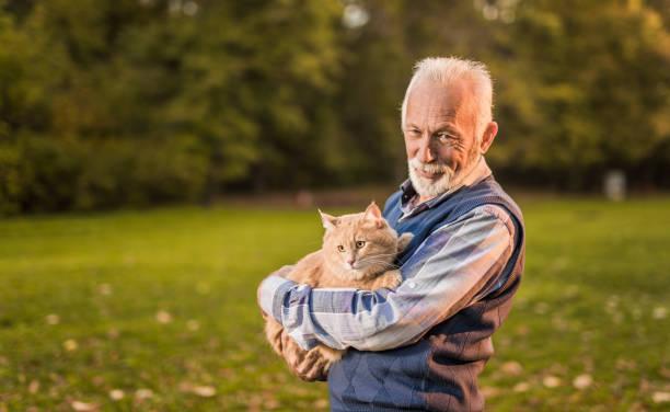 Happy senior man loves taking his male maine coon cat for a walk in picture id879391336?b=1&k=6&m=879391336&s=612x612&w=0&h=wmlcsvhb4t 2uorxotpg5luhi486uvxcu1ctfh3sxdy=