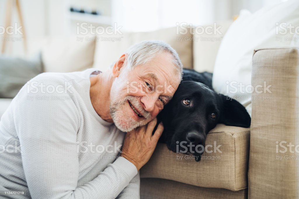 A happy senior man playing with a black pet dog indoors at home.