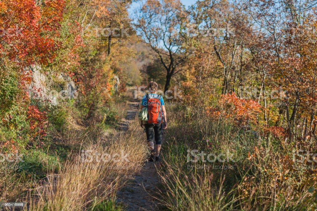 Happy Senior Woman Hiking at Autumnal Dawn in Julian Alps,Italy, Europe zbiór zdjęć royalty-free