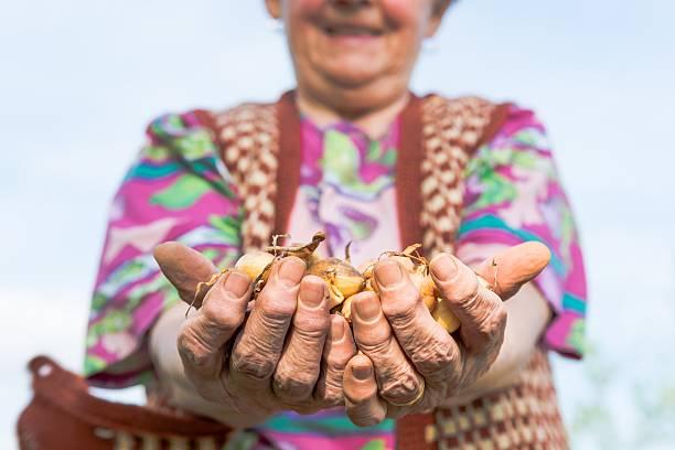 glückliche senior frau stolz halten silberzwiebeln. - sexy granny stock-fotos und bilder