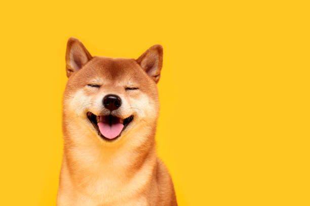 What Is Shiba Inu (SHIB) Cryptocurrency And How Does It Work? 1