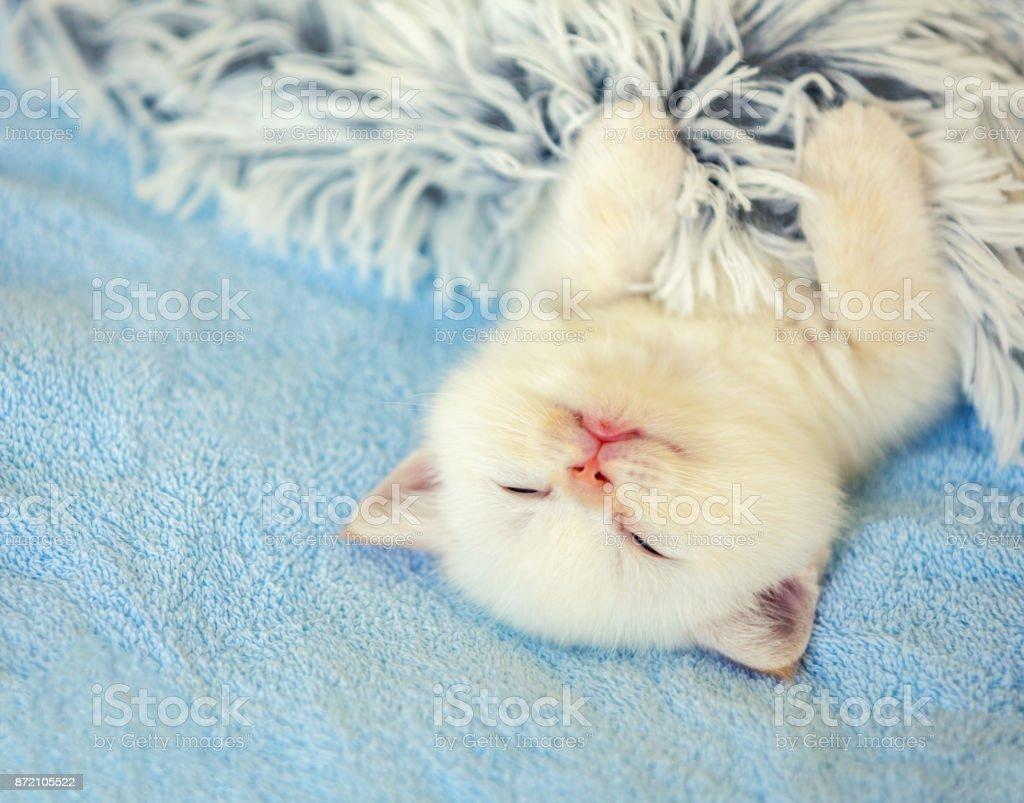 Glückliches schlafendes niedliches kleine Kätzchen auf dem Rücken bedeckt mit einer flauschigen Decke – Foto