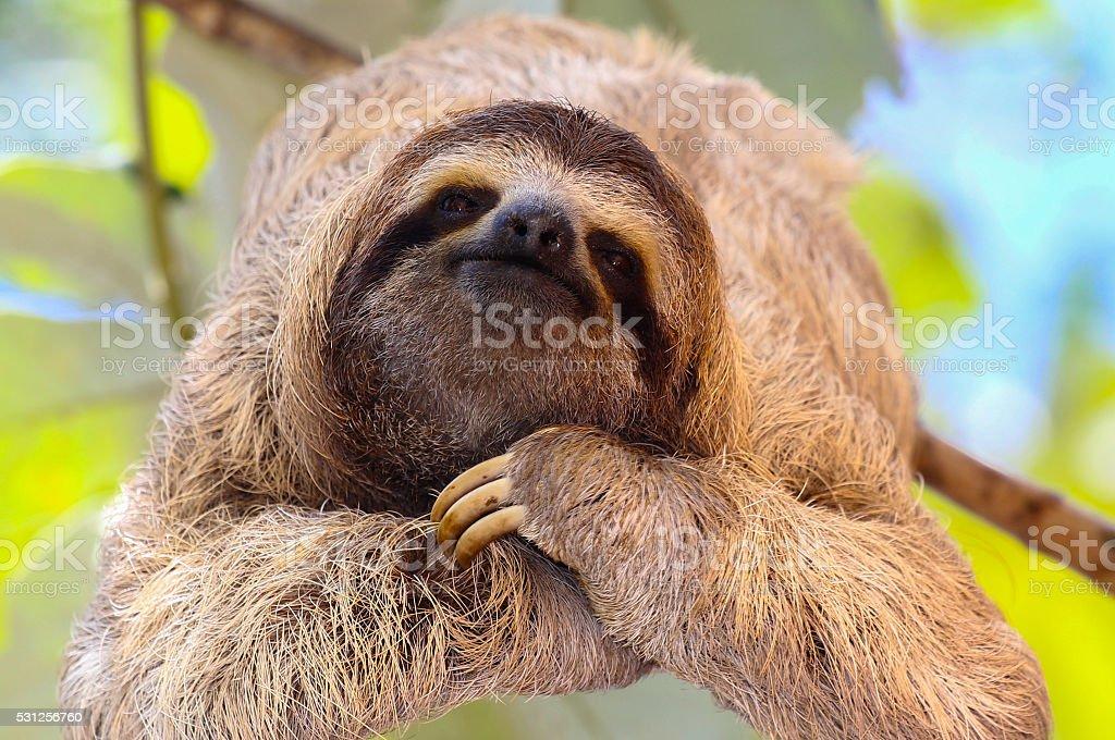 Happy Sloth stock photo