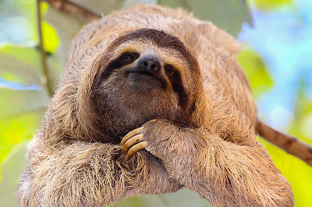 happy sloth - sloth stock pictures, royalty-free photos & images