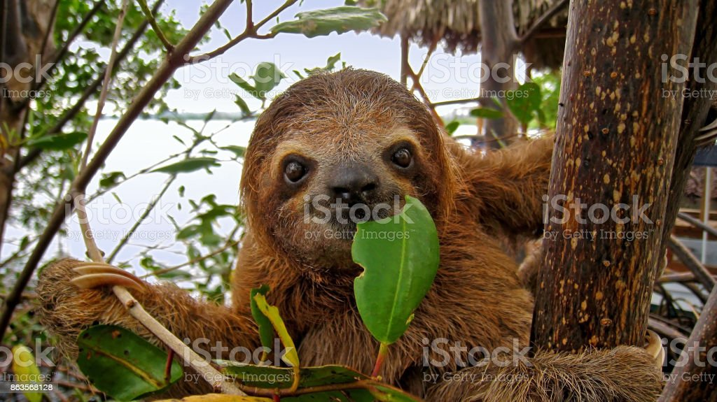 Happy sloth stock photo