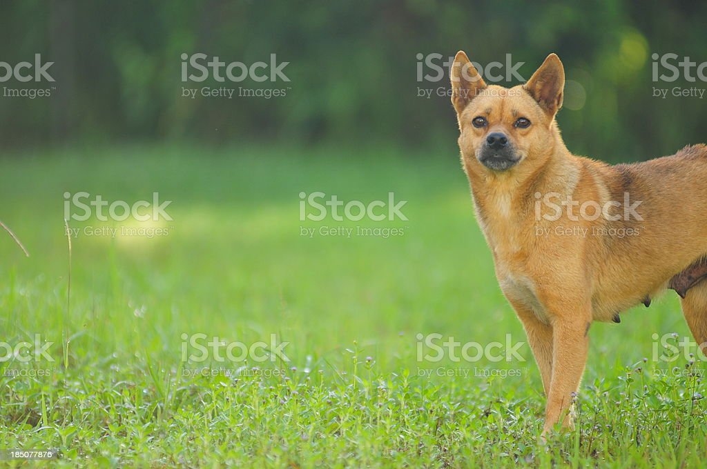 Happy smiling dog looking up royalty-free stock photo