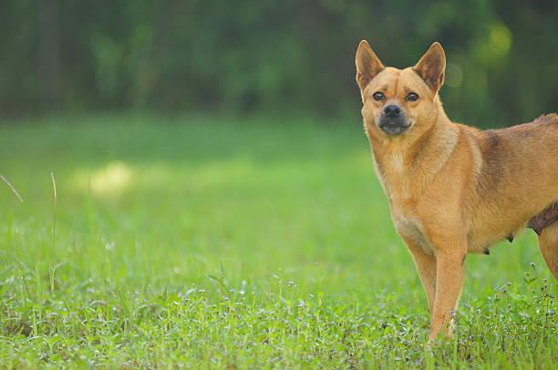 Happy smiling dog looking up picture id185077876?b=1&k=6&m=185077876&s=612x612&w=0&h=bzllzqksd iw4aolndb sihlxbbccjfivbbx907ea3k=