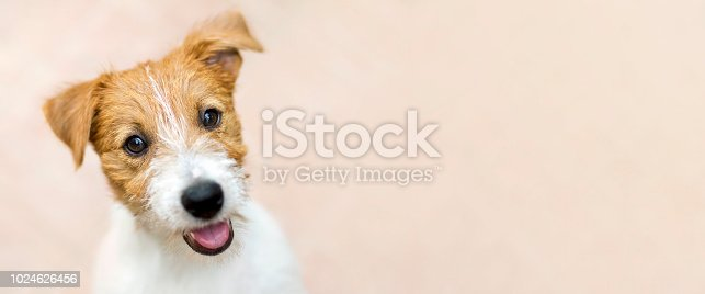 istock Happy smiling pet dog puppy - web banner with copy space 1024626456