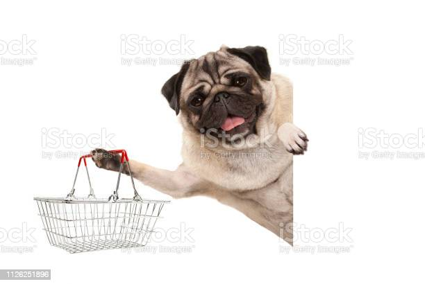 Happy smiling pug puppy dog holding up wire metal shopping basket picture id1126251896?b=1&k=6&m=1126251896&s=612x612&h=ocnih agrqbfayuehcwnakraih kfbwtovaz0m4q32u=