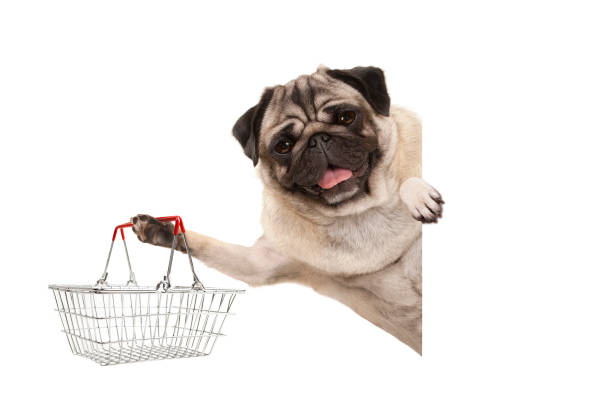 Happy smiling pug puppy dog holding up wire metal shopping basket picture id1126251896?b=1&k=6&m=1126251896&s=612x612&w=0&h=iea3tz0vjngx ndobdkjbwqz2fpv0jy1qwdftrhg0nk=