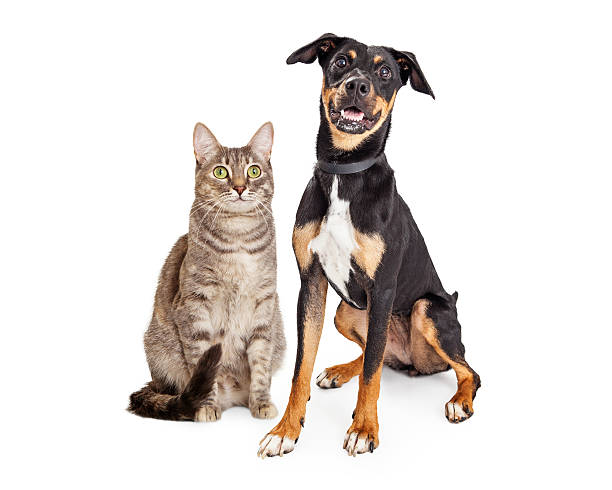 Happy smiling tabby cat and crossbreed dog picture id592685464?b=1&k=6&m=592685464&s=612x612&w=0&h=niwpjo3hnos jgg2gsk7xvllsbuxygtkhoskxbgvz8s=