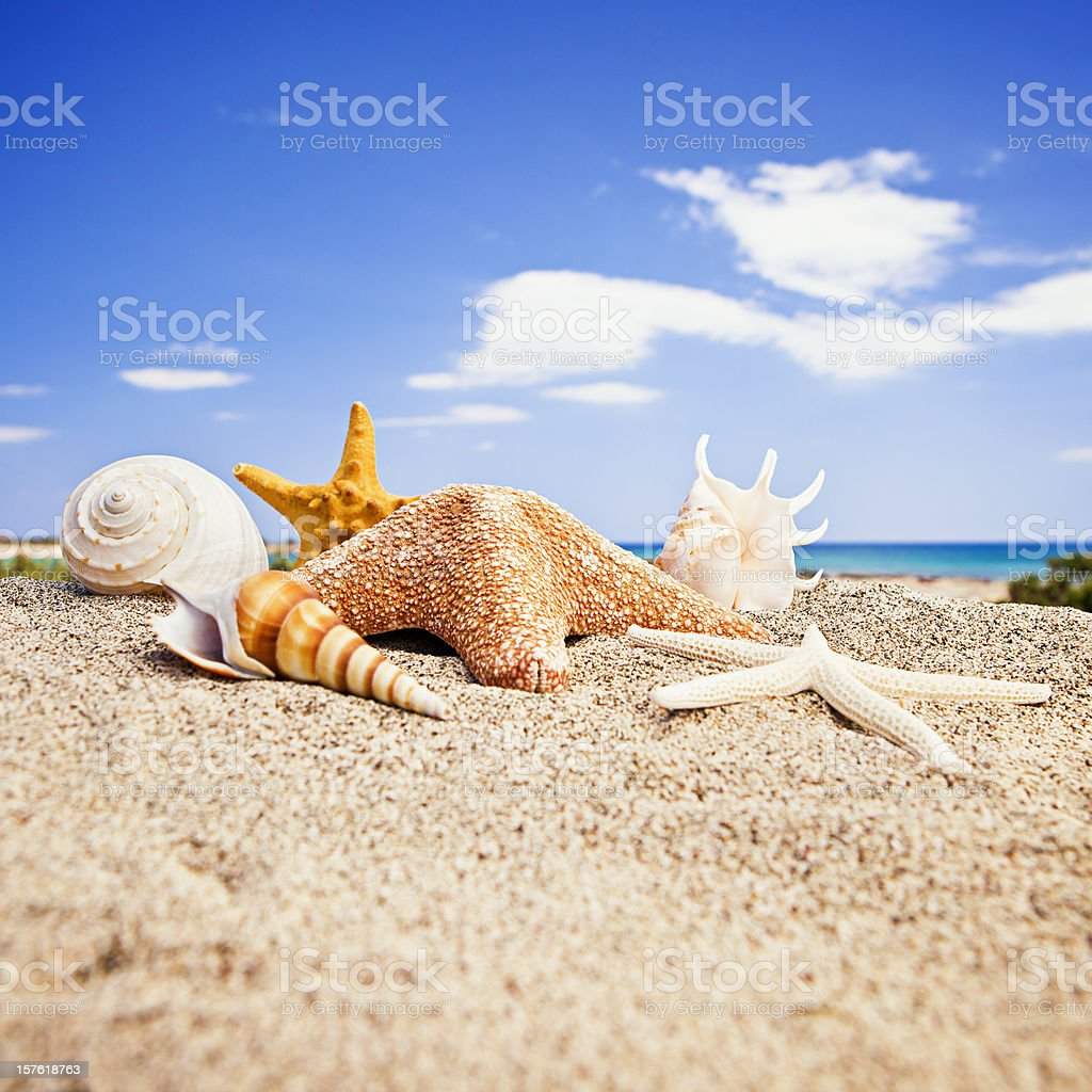 Happy starfishes and shells friends on beach royalty-free stock photo