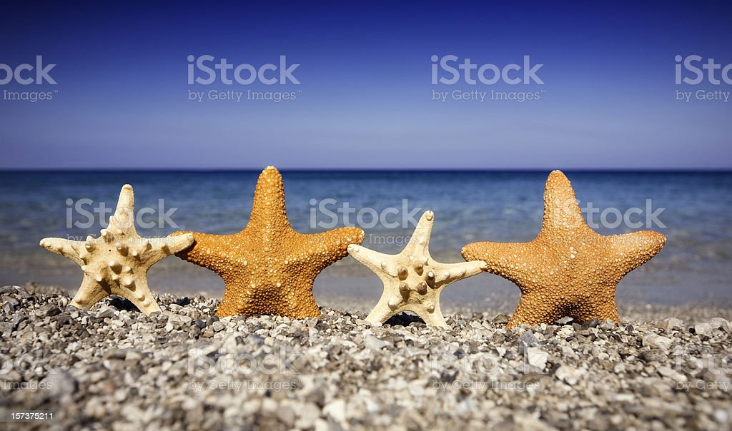 Happy starfishes on the beach royalty-free stock photo