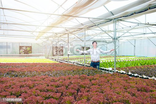 1096949092 istock photo Happy successful handsome asian man spread two hand with smile in greenhouse hydroponic organic nursery farm, Small business entrepreneur and organic vegetable farm and healthy food concept 1168984858