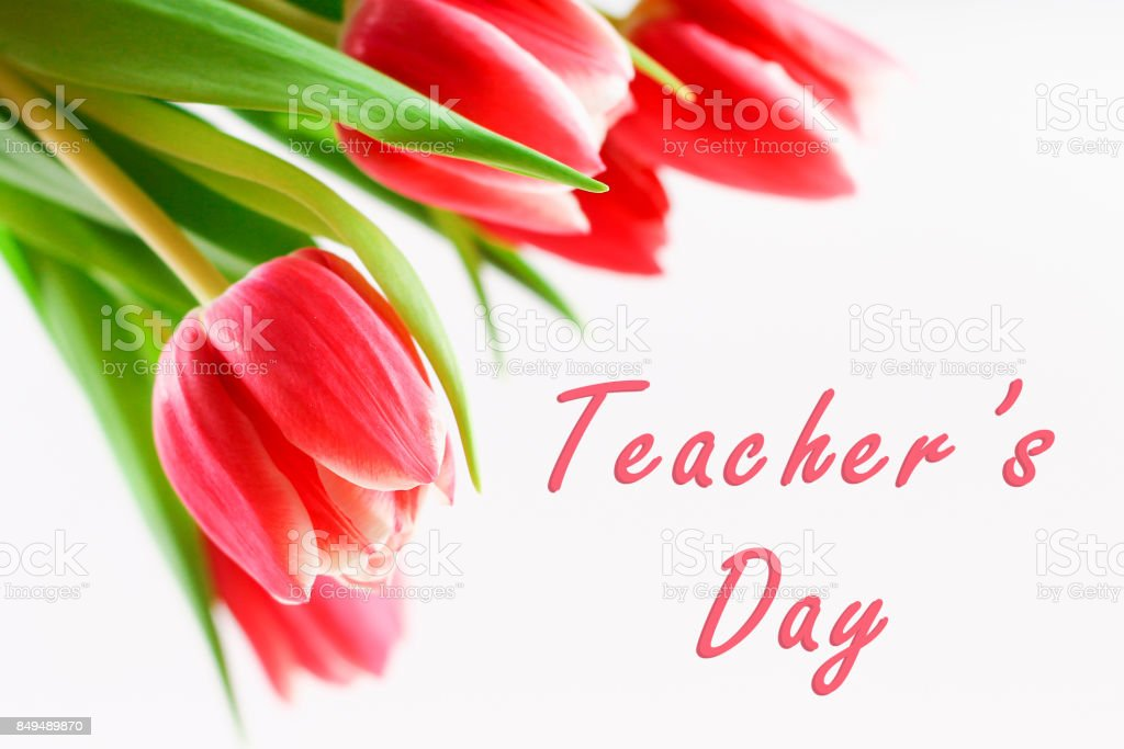 Happy teachers day with tulip flower, message for teacher in special...