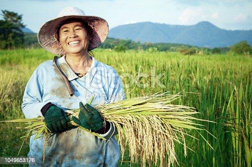 happy Thai female farmer harvesting rice in farm countryside Thailand