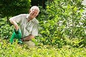 Senior gardener is enjoying his work in garden
