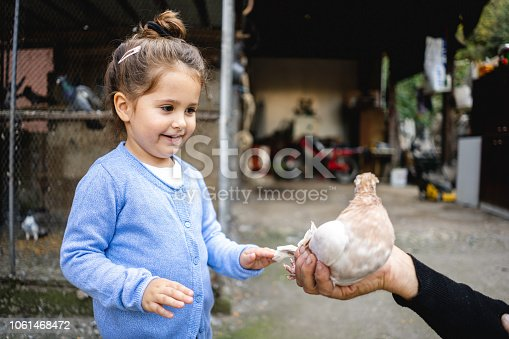 istock Happy toddler girl and a senior man holding a pigeon 1061468472