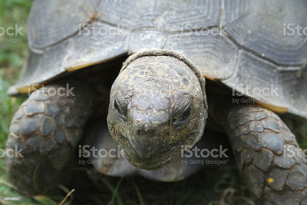 Heureux de tortue photo libre de droits