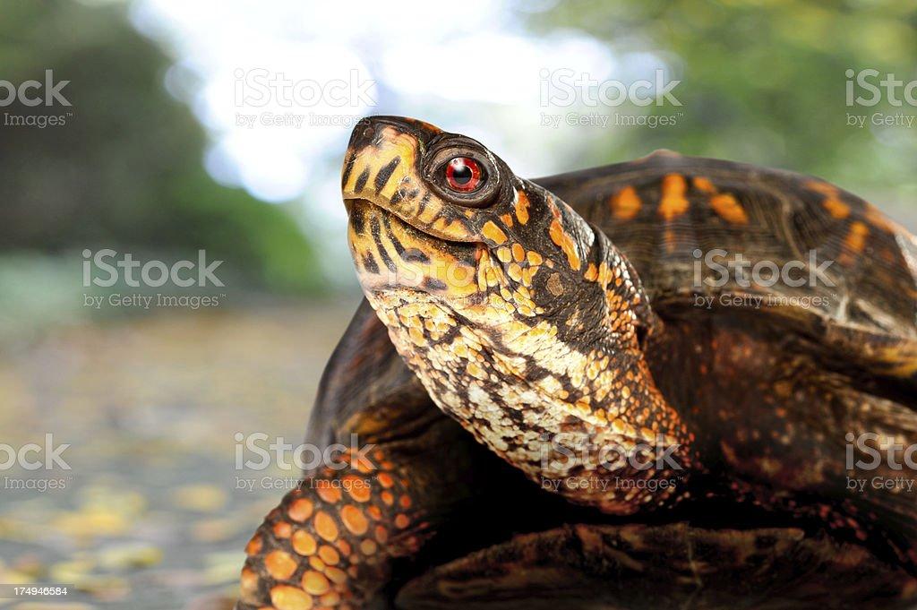 Happy Turtle on Sidewalk stock photo