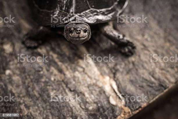 Happy turtle on the shore closeup picture id519581682?b=1&k=6&m=519581682&s=612x612&h=zqvkqmxhjb9u5khmb3hhx1ln m5vxvsnj3aguqqc3lo=