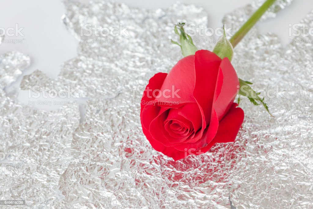 Single Red Rose Flower Stock Images: Happy Valentines Day Beautiful Single Red Rose On Shiny
