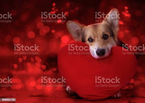 Happy valentines day my love picture id898894760?b=1&k=6&m=898894760&s=612x612&h=imhnbrmmqy96 wllzhk0 jqd7ygm3 6rmyl3fisyjzg=