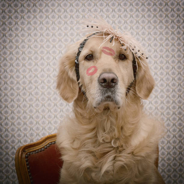 Happy Valentine's Day. Portrait of a dog with lipstick kisses. Vintage look. stock photo