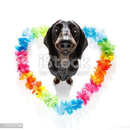 638484874 istock photo happy valentines dog 1132212156