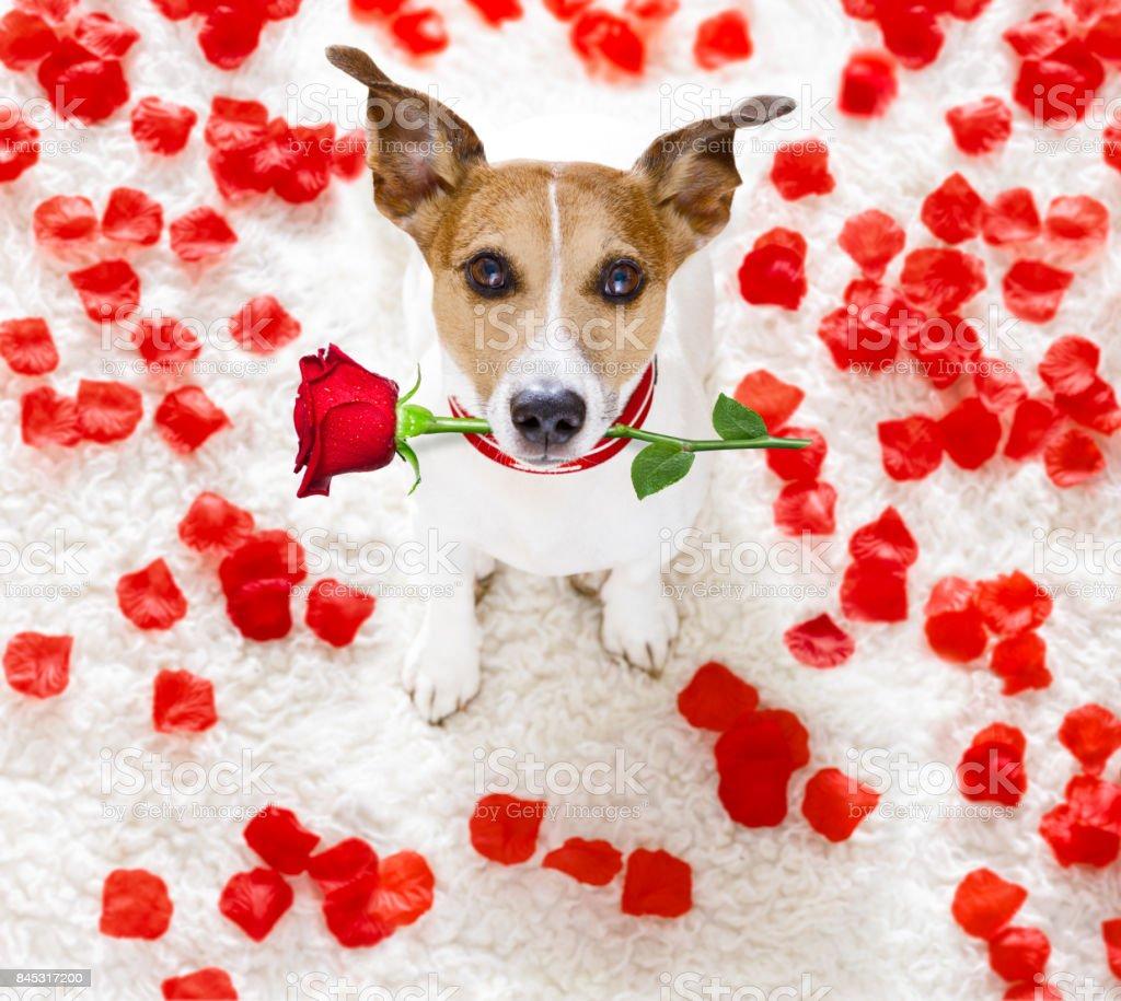 Happy Valentines Hund – Foto