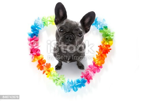 istock happy valentines dog 846742676