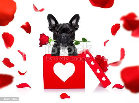 istock happy valentines dog 904239060