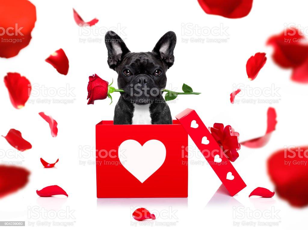 happy valentines dog stock photo