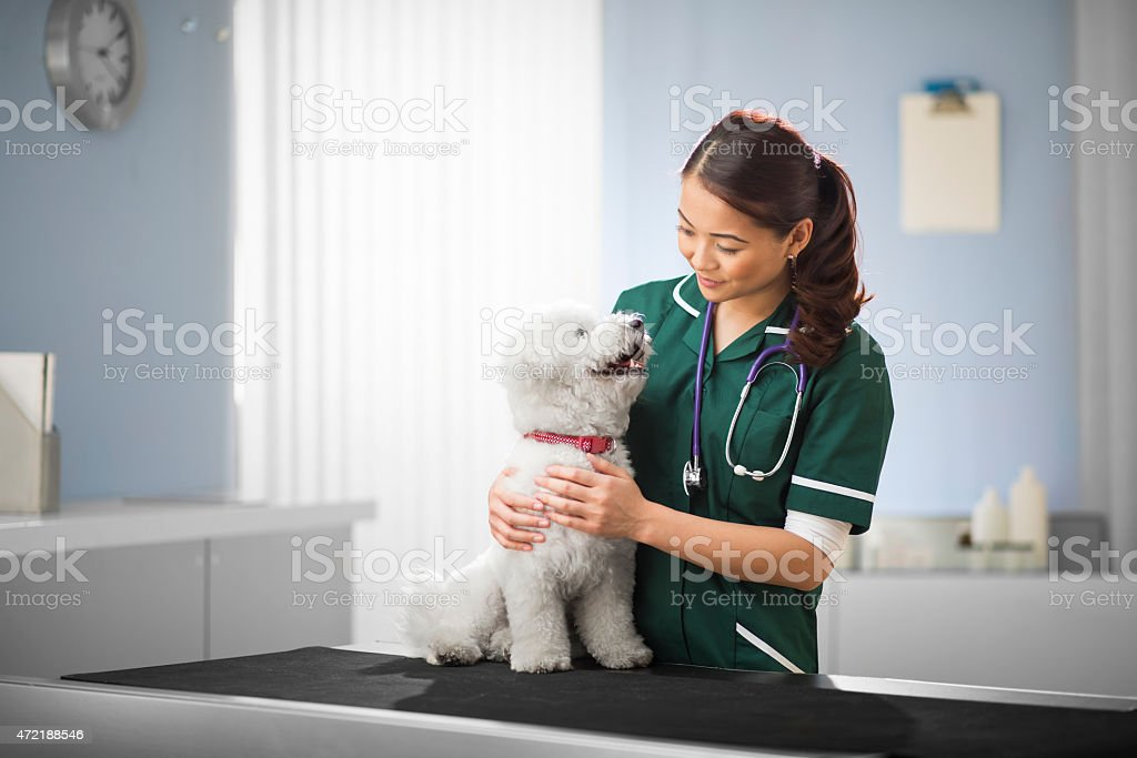 happy vet and dog stock photo