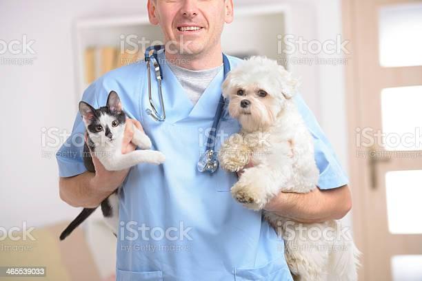 Happy vet with dog and cat picture id465539033?b=1&k=6&m=465539033&s=612x612&h=vhi8g1rff3d5fdpaxwcvwb32ivozcjuqrbyhuwnqrts=