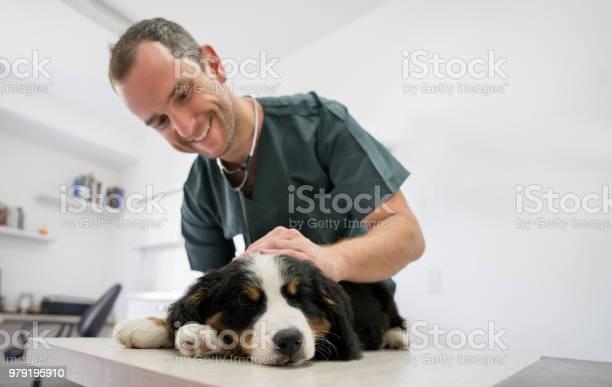 Happy veterinarian doing a medical exam on a puppy picture id979195910?b=1&k=6&m=979195910&s=612x612&h= f0zdfz7o2q1oo53flehojh0eluyrkptsquuv w4siu=