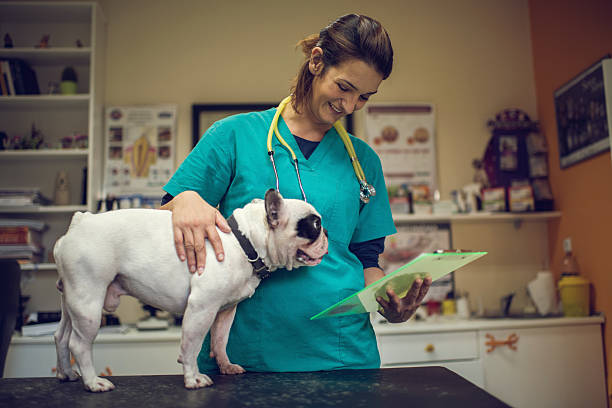 Happy veterinarian examining medical documents of a dog picture id504927914?b=1&k=6&m=504927914&s=612x612&w=0&h=g2xpsao4gsgjbrpo6xyj9gw8jua04y4ukoc4fw37vtm=