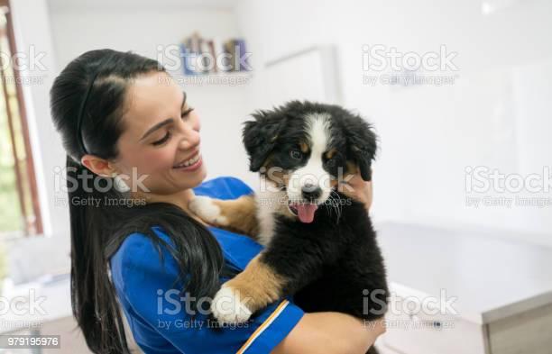 Happy veterinarian holding a beautiful puppy picture id979195976?b=1&k=6&m=979195976&s=612x612&h=qzvwyyrlzznfsgw8i1ymniflvv3g7hk4nt9zqxypefk=