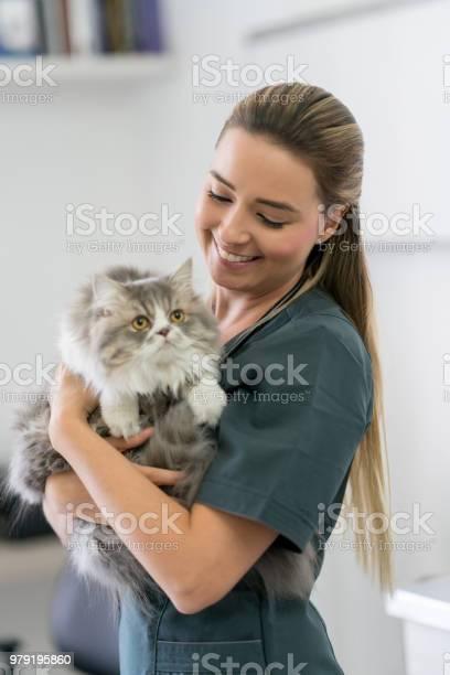 Happy veterinarian holding a cat and smiling picture id979195860?b=1&k=6&m=979195860&s=612x612&h=ijhfom5ho6tmrrlr8bglppic7qsyqc6cdo88xfpnllg=